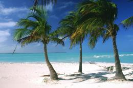palm trees bahamas islands caribbean pics desktop wallpapers photos 175