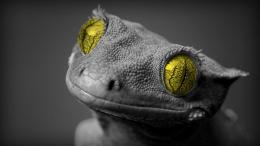 Beautiful Chameleon HD Wallpapers 1860