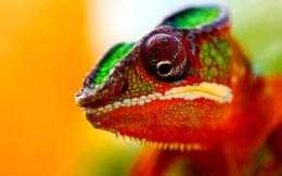 : Chameleon Wallpapers, Chameleon Desktop Wallpapers, Chameleon 482