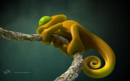 Chameleon Hd wallpaper 1674