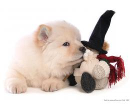 Puppies Chow Chow Puppy Wallpaper 1425