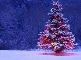 1024x768 Christmas Tree desktop PC and Mac wallpaper 776