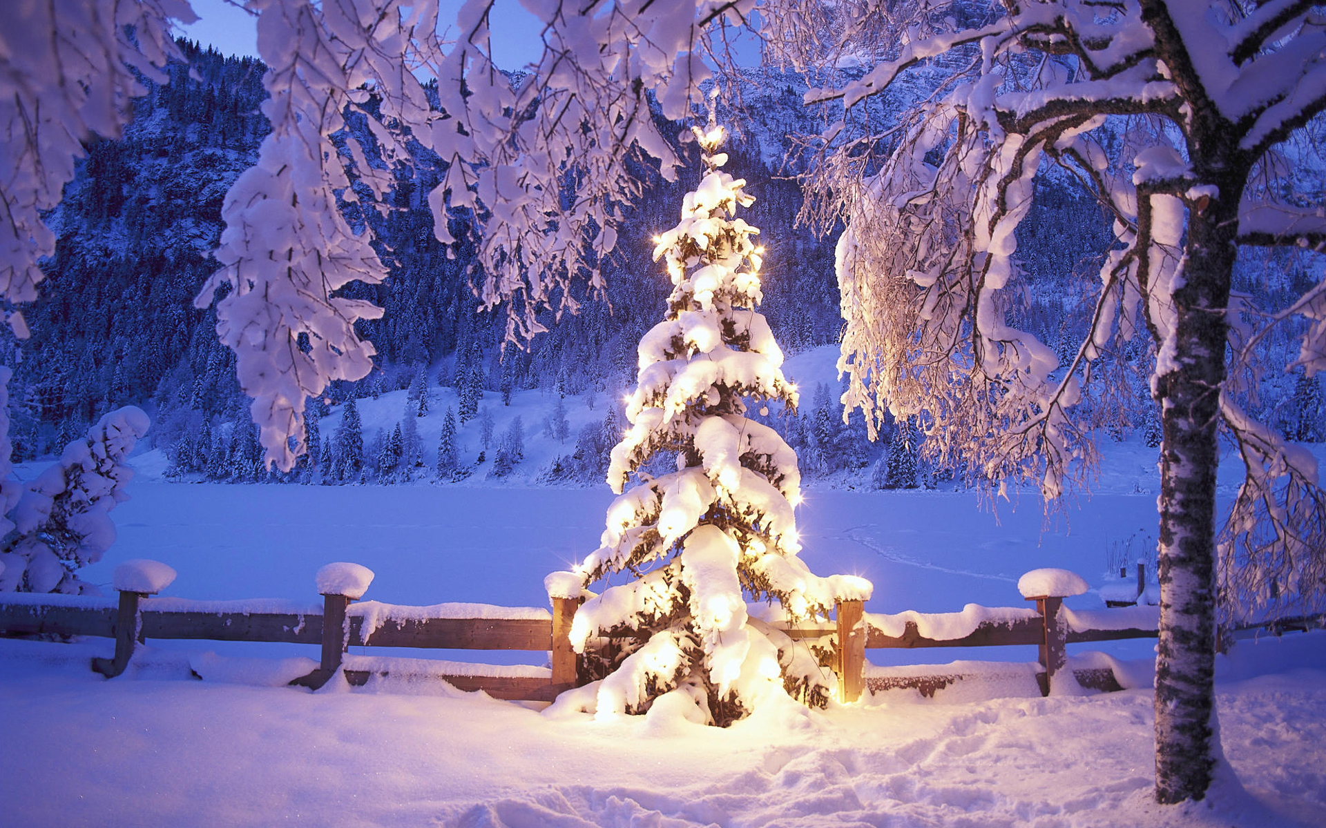 snow trees lights christmas xmas tree desktop hd wallpaper 861124 1944
