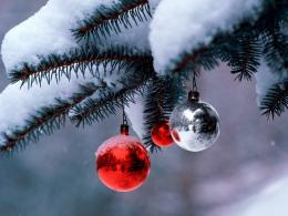 Winter snow Christmas treedesktop wallpaper By Priya Sharma 315