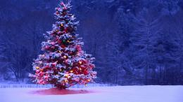 Christmas Tree Desktop Wallpapers 720