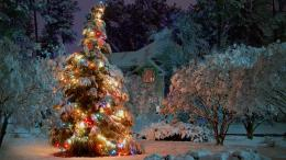 2560x1440 Outdoor Christmas tree desktop PC and Mac wallpaper 519