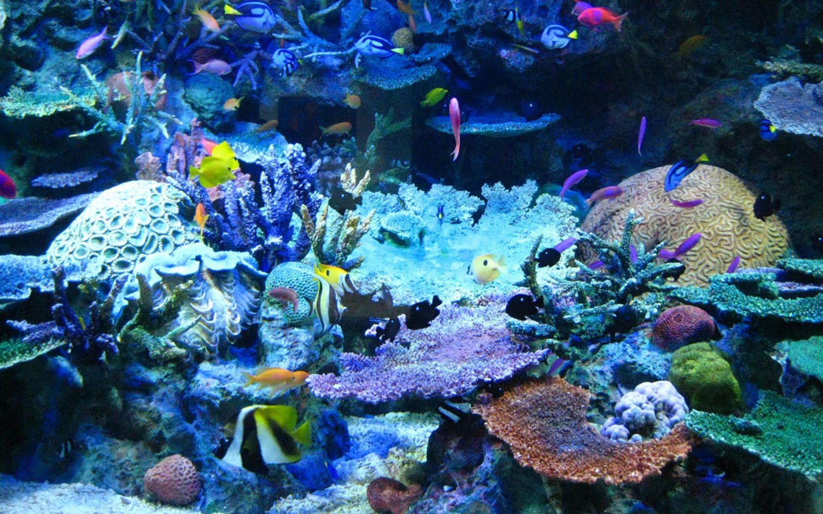Beautiful Coral Reef show 1859