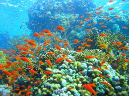Coral Reef Wallpapers 204