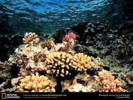 coral reef wallpapers 460