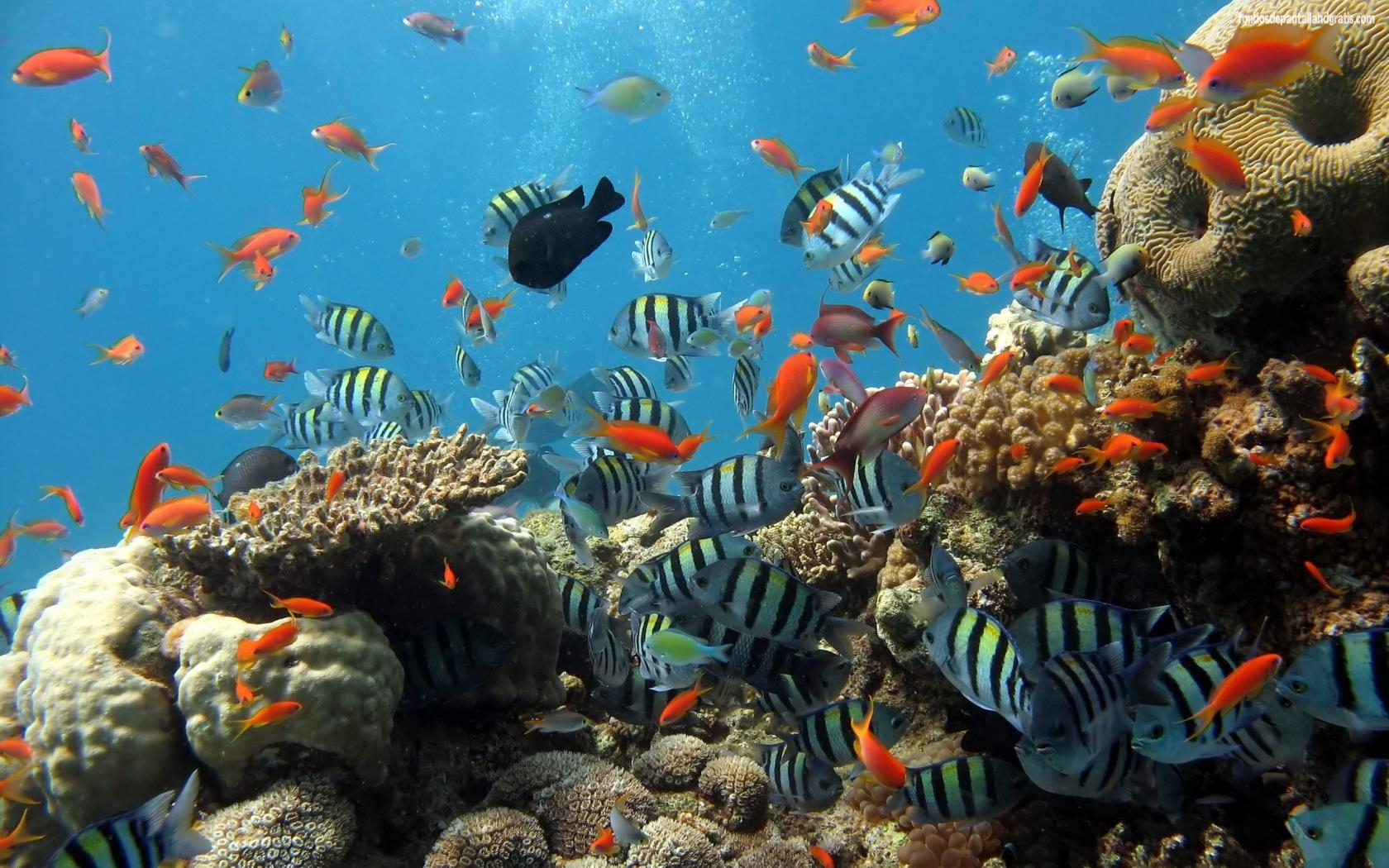 Coral+Reefs wallpapers 199 1631