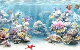 coral reef wallpaper 1183