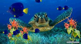 Coral Reefs Wallpapers 1484