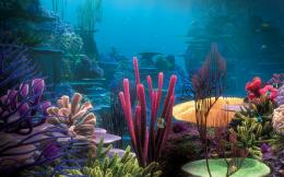Life in the Coral Reef 360