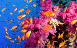 Colorful coral reef wallpaper with fishes 1004
