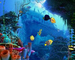 coral reef wallpaper 123