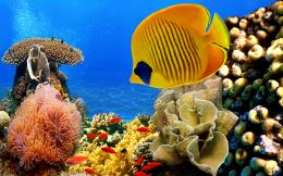 Coral reef Wallpapers Pictures Photos Images 168
