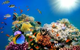 Coral Reef Fish wallpaper 1026