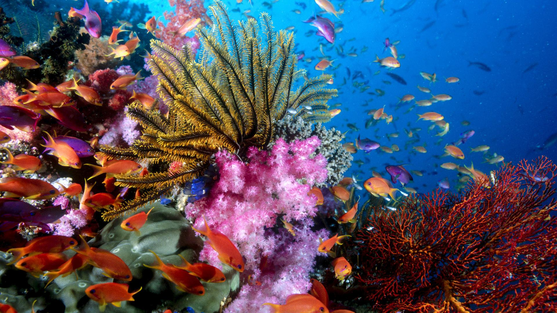 Coral Reef HD Wallpapers 1162