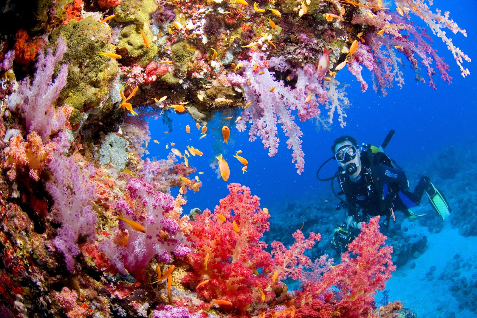 share to facebook share to pinterest labels about coral reef coral 977