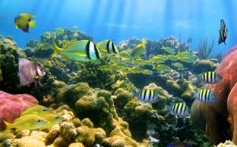 coral reef wallpapers 979