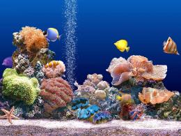 Beautiful Coral Reef Photo 11 1997