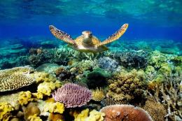 Great Barrier Reef Turtle Wallpaper jpg 1838