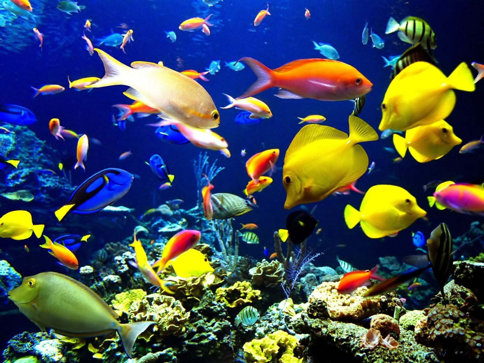 Category Animal Coral Reef Life Fish HD Wallpaper 137