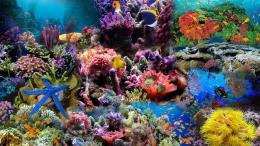 Coral Reef WallpaperHD Wallpapers 1410