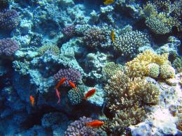 Coral Reef HD Wallpaper Coral Reef Picture Coral Reef Photo High 974