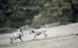 wallpapers dalmatian dog hd wallpapers dalmatian dog new hd images 1235