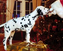 Christmas dalmatian dog holiday animals 1686
