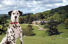 Awesome Dalmatian Dog Best Desktop Wallpapers Free Dog HD Images 815