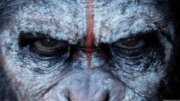 Dawn of the Planet of the Apes 2014 Movie Images, Pictures, Photos, HD 1027