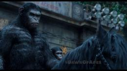 Dawn of the Planet of the Apes Wallpapers 331