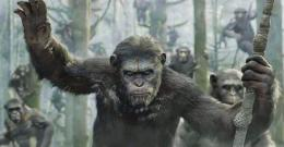 Dawn of the Planet of the Apes 2014 Wallpapers 1437