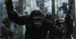 Dawn of the Planet of the Apes Wallpapers 793