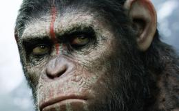 Dawn of the Planet of the Apes 2014 338