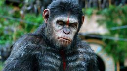 Movies HD Dawn Of The Planet Of The Apes Wallpaper 732