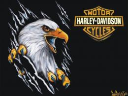 Harley Davidson Eagle Wallpaper 7036 Hd Wallpapers 188