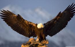 Eagle Wallpapers – HD Wallpapers Eagle Wallpapers – HD Background 1472