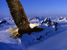 hd eagle wallpaper hd eagle wallpaper hd eagle wallpaper 1877