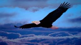 Eagle Hd Wallpaper 9868 Hd Wallpapers 587