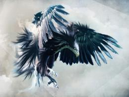 Blue Eagle DesignWallpaper Pin it 443