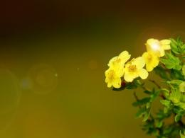 Yellow elegant floral wallpaper Plant desktop background 1270