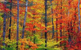 Colorful Autumn HD Wallpapers 1441