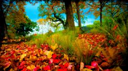 Fall HD Wallpapers 1080p 824