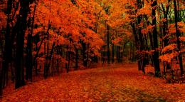 Wallpaper: fall path hd wallpapers 1833
