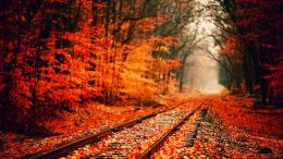 Tagged with: Fall HD Wallpapers 1080p 634