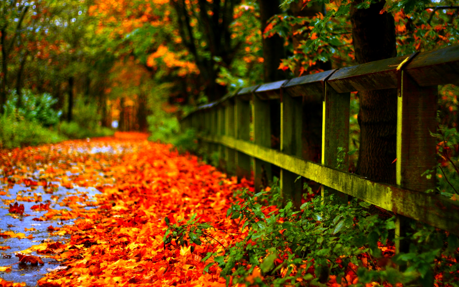 27 autumn leaves wallpaper 1510 fall hd wallpapers