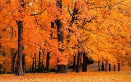 Latest Top HD Autumn Wallpapers 814